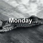 monday cat