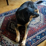 bad odour carpet cleaning tips