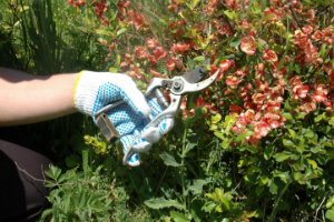 Gardening Services Boston Manor TW8